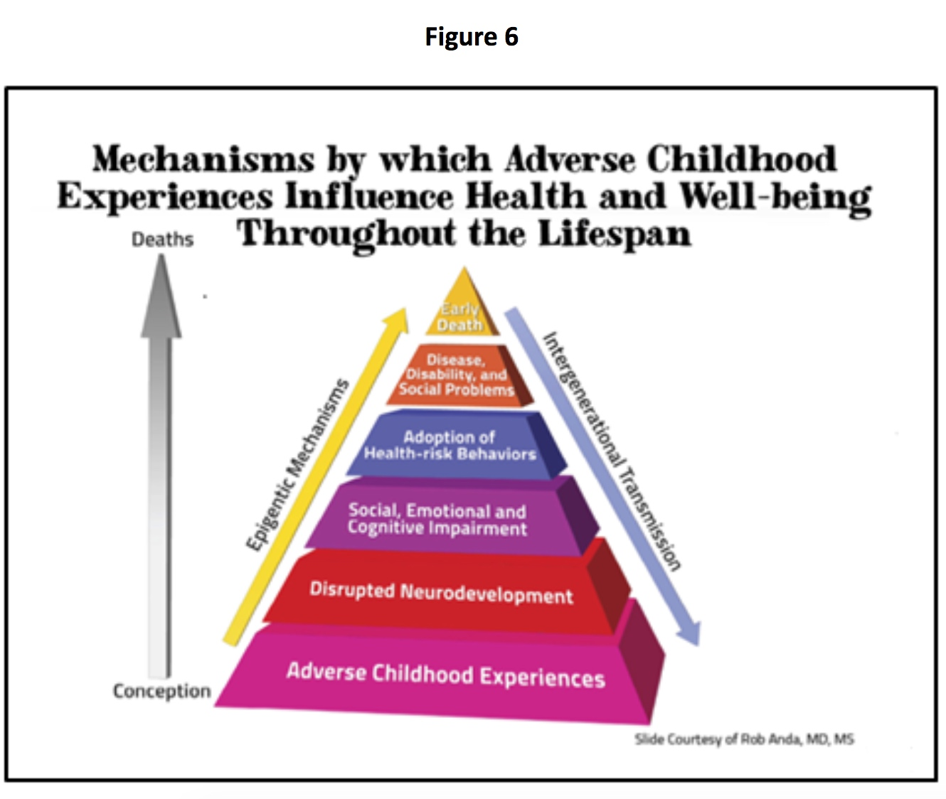 aces impacts through the life span pyramid