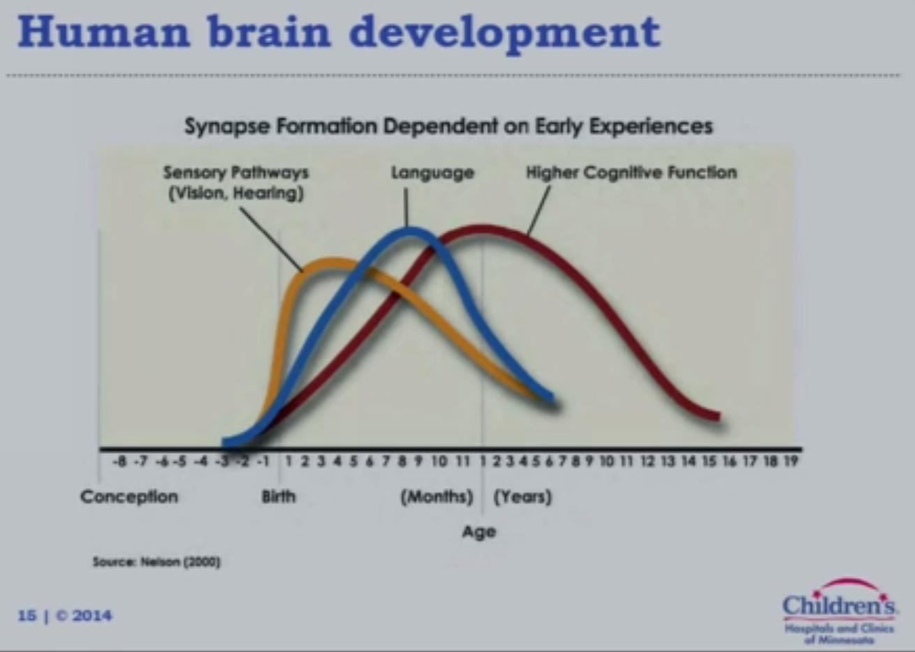 human brain development